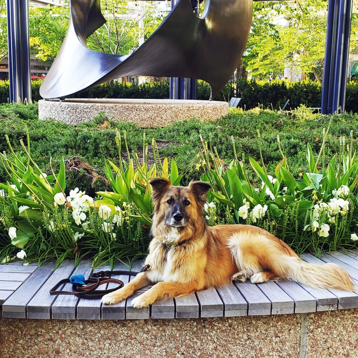 Dog laying in front of flowers and sculpture.